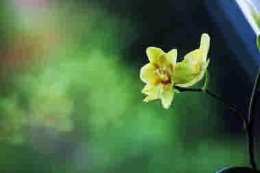 Närbild, grön, blomma