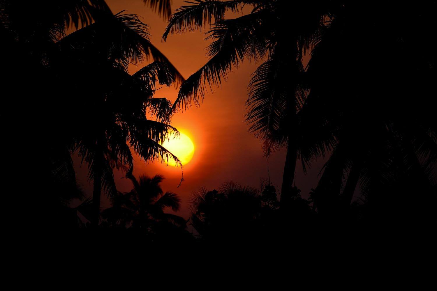 Sunrise